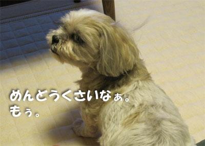20120920-01.jpg