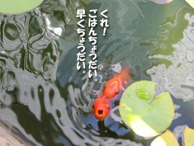 20130919-04.jpg